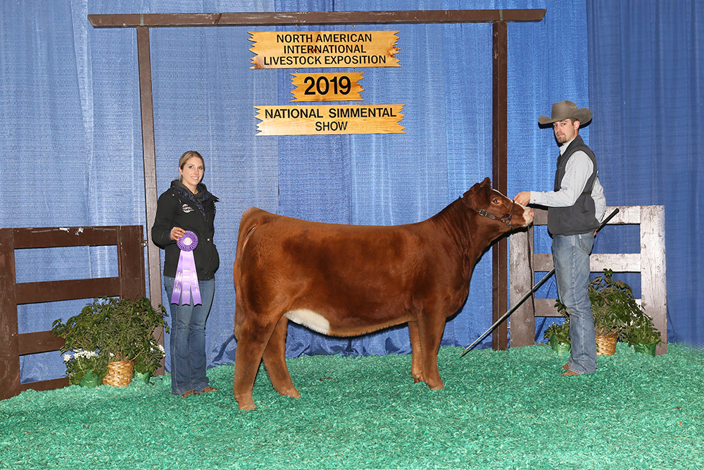 2019 NAILE Division 1 Simmental Champion